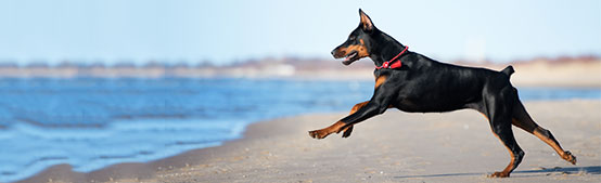 Dog Friendly Beaches and Accomodations - Quality Inn & Suites, Coos Bay