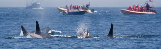 Unique Things to Do in North Bend, OR - Whale Watching Week at Cape Arago