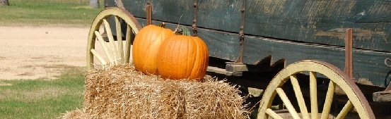 Fun Things to Do in North Bend, Oregon - Mahaffy Ranch U-Pick Pumpkin Patch