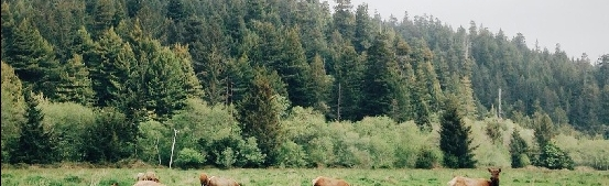 Coos Bay, Oregon Things to Do in Nature - South Slough Bird Watching